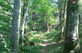 піші прогулянки по Карпатах Західна Україна