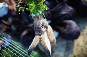 міні-зоопарк в тваринами Карпати