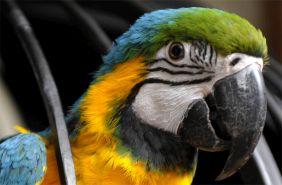 папуга в готелі вежа ведмежа