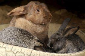кролики в карпатах