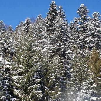 Карпати взимку, регіон Славське - Волосянка