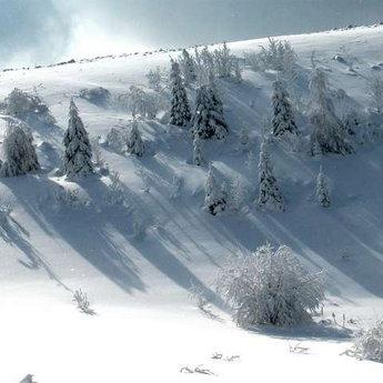 Засніжені Карпати взимку