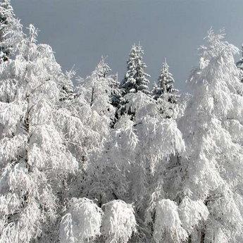 Карпатська природа взимку