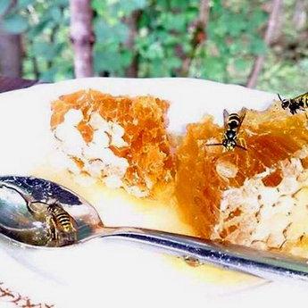 Мед в Карпатах