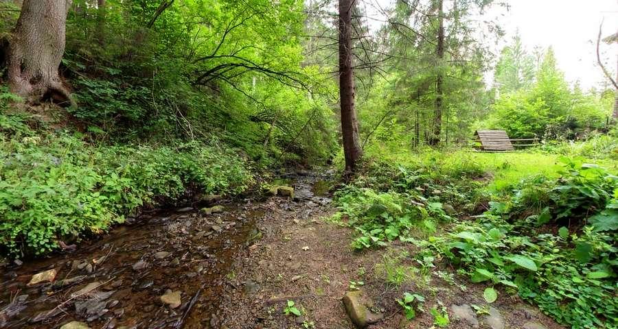 Карпатський струмок влітку в мотузковому парку Вежі Ведмежої