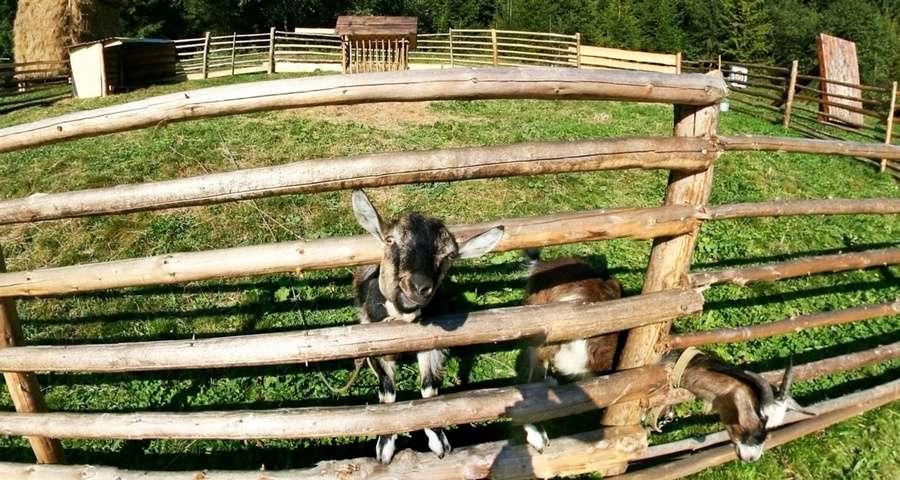 Козеня, міні-ферма в Карпатах, Вежа Ведмежа