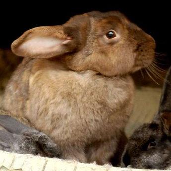 Кролиця з кроленятами, міні-ферма Вежі Ведмежої