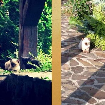 Кішка з кошенятами, готель Вежа Ведмежа