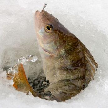 Карпати, зимова риболка
