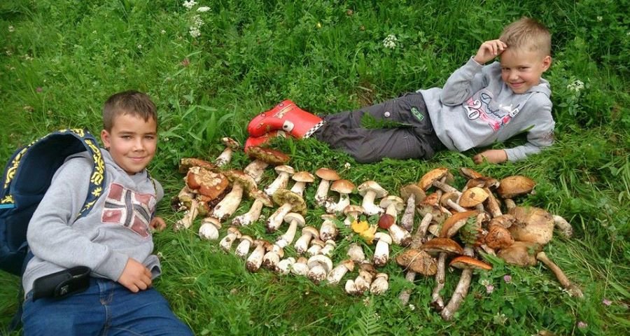 Хлопчики назбирали в Карпатах багато грибів