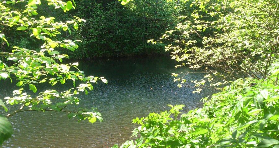 Чисте озеро влітку