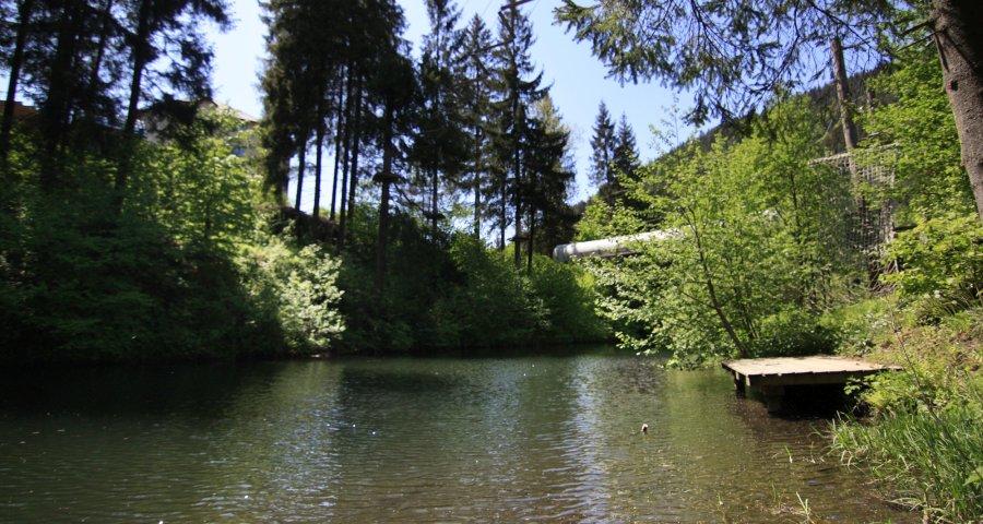 Відпочинок на озері влітку, Україна, Карпати (Волосянка)