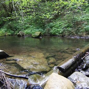 Чиста карпатська джерельна вода