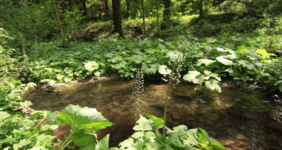 Річечка в лісі