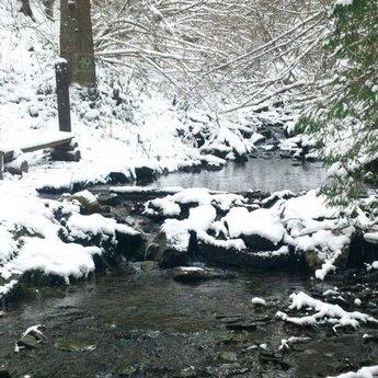 Гірський потічок в Карпатському лісі взимку