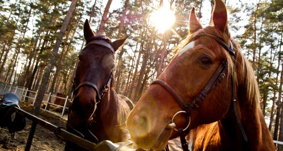Коні в Карпатах