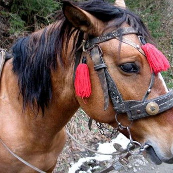 Кінь в Карпатах