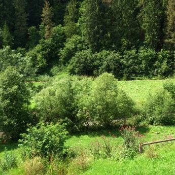Зелені береги карпатської ріки Славки