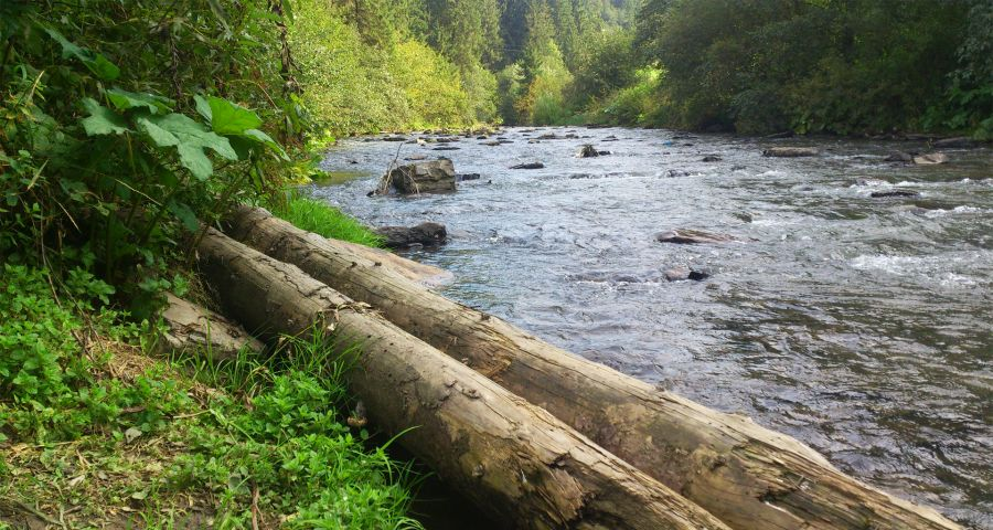 Берег ріки Славка у Волосянці (Карпати) літом