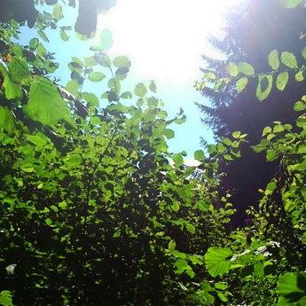 Ведмежа стежка, тризуб в Карпатах