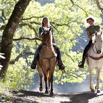 Верхова їзда в Карпатах, коні