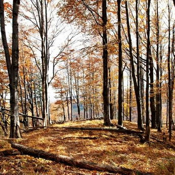 Carpathians nature in autumn