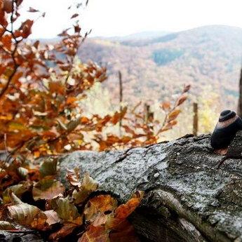 Карпати, осінь, равлик