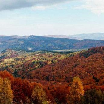 Coloured autumn in the Carpathians