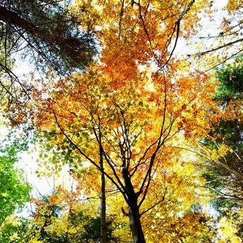 Picturesque autumn of Carpathian