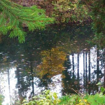 Near the lake in Volosyanka near Vezha Vedmezha Hotel. Moments fall