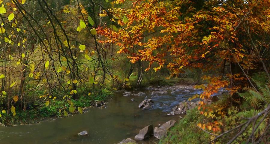 Осеннее многоцветие: около речки Славка в Карпатах на Львовщине (Славское - Волосянка)