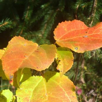 Кольори осені
