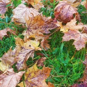 Autumn leaf litter