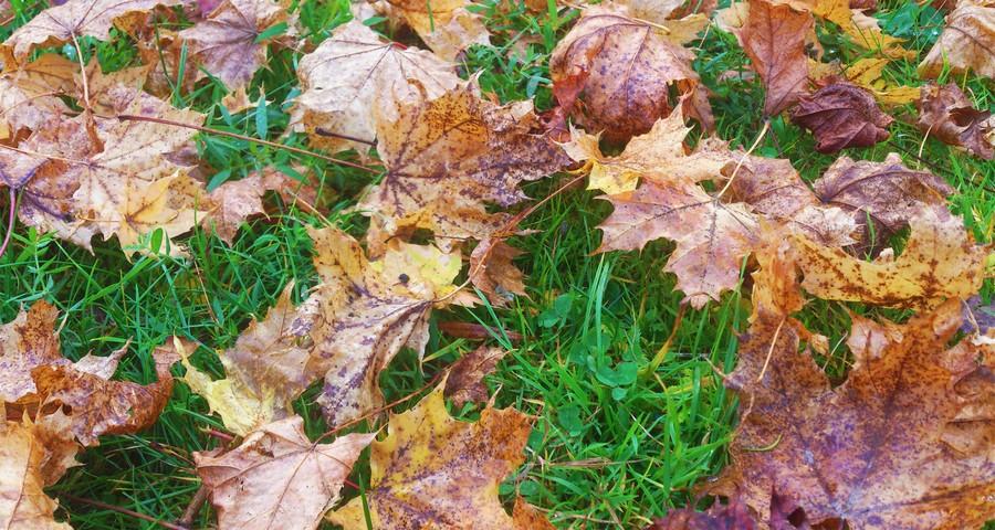 Осіннє опале листя