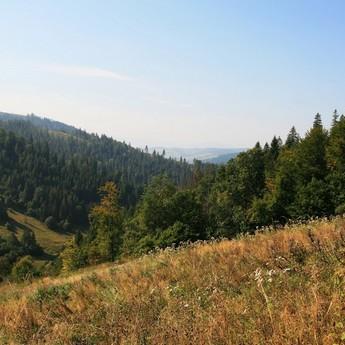 Ведмежа стежина восени. Піші осінні мандрівки карпатським лісом