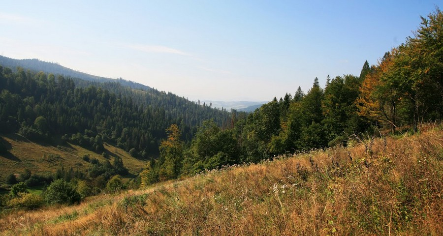 The Bear path in autumn. Hiking in The Fall Carpathian forest