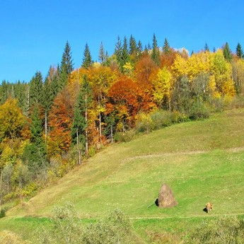 Сонячний осінній день у Волосянці біля селища Славське у Карпатах (Україна)
