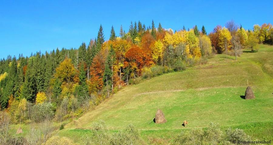 Sunny autumn day in Volosyanka near the village Slavske in the Carpathian (Ukraine)