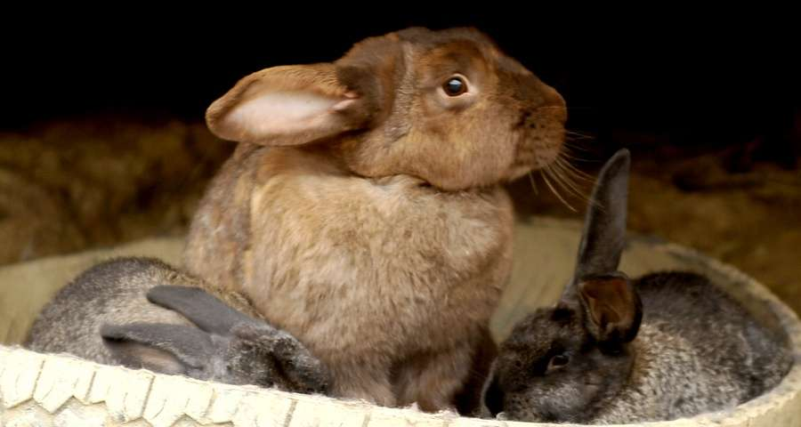Rabbits and other animals give children a lot of vivid emotions