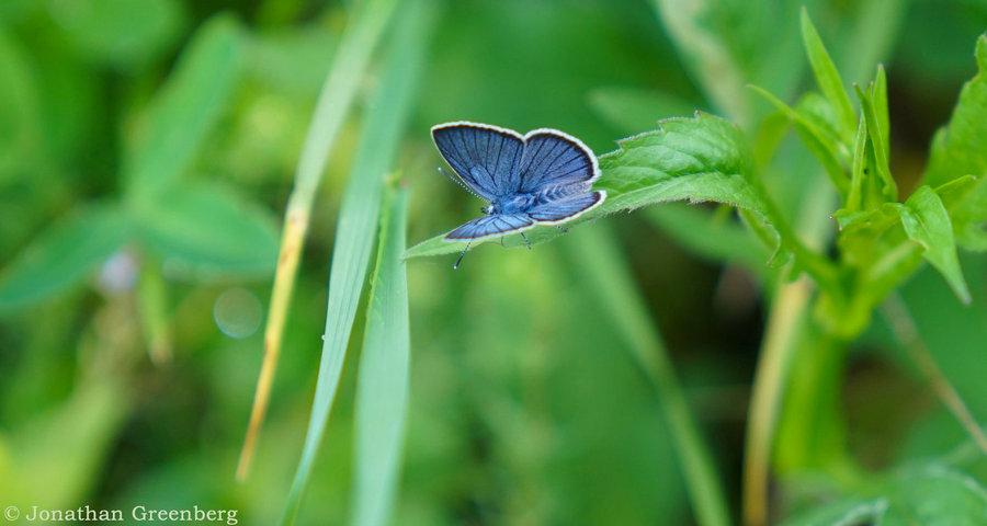 Природа Карпат влітку. Красиві картинки з метеликами