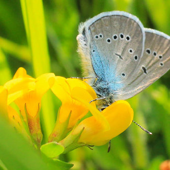 Метелик на травичці. Літні пейзажі