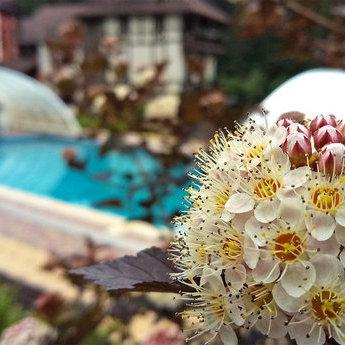 Відкритий басейн з підігрівом води у Карпатах для комфортного літнього відпочинку 2019