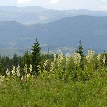 Карпатські краєвиди літом. Мальовнича Україна