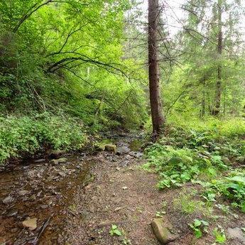 Карпатський ліс літом