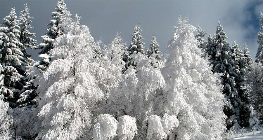 Winter carpathians nature