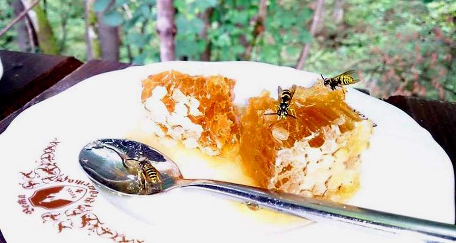 Honey in the Carpathians