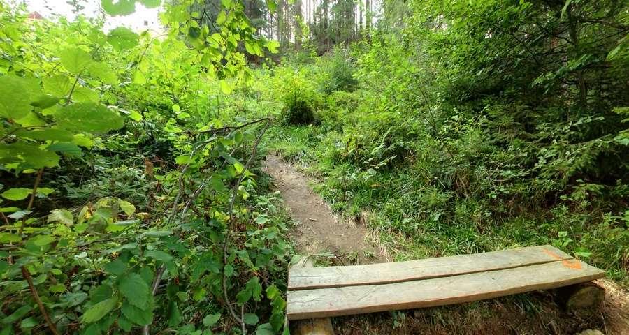 Природа в мотузковому парку Ведмежа Лазанка, Літо