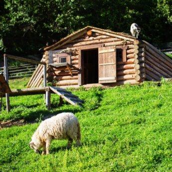 Баран, коза і вівця на міні-фермі в Карпатах