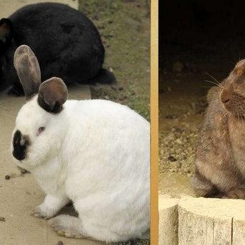 Кролі на міні-фермі в готелі Вежа Ведмежа