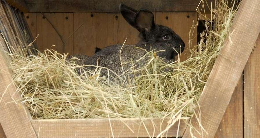 Кролик в сіні, Вежа Ведмежа